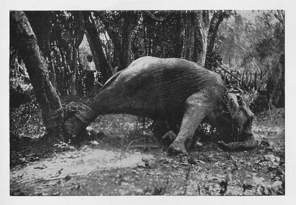 Sri Lanka「'Elephant Kraaling in Ceylon - Noosed', c1890,」:写真・画像(18)[壁紙.com]