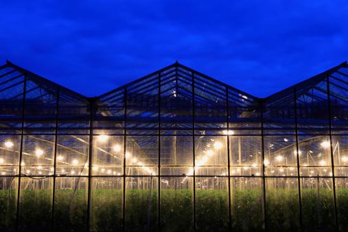 オランダ「assimilation 照明の温室」:スマホ壁紙(5)