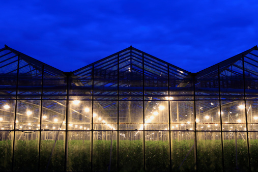 Netherlands「assimilation lights in a greenhouse」:スマホ壁紙(18)