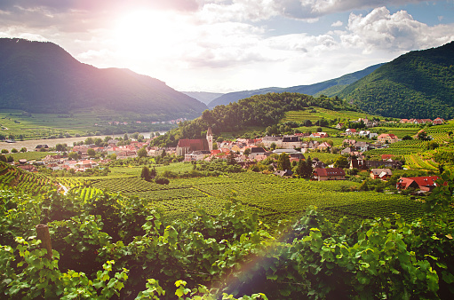 "UNESCO「View to the famous town ""Spitz an der Donau"" - Danube Valley - Austria」:スマホ壁紙(17)"