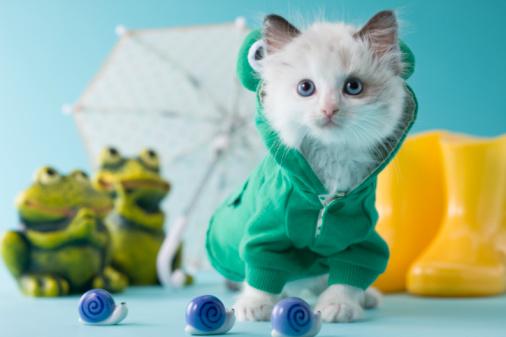 snails「Rag Doll Kitten and Rainy Season」:スマホ壁紙(15)