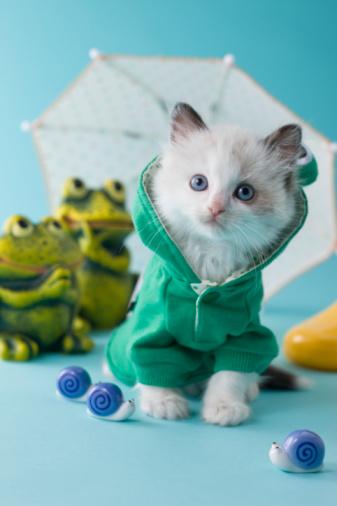 カタツムリ「Rag Doll Kitten and Rainy Season」:スマホ壁紙(8)