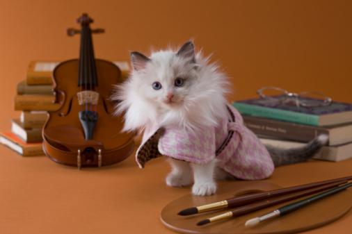 Violin「Rag Doll Kitten and Art」:スマホ壁紙(7)