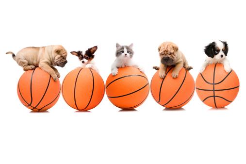 Kitten「basketball team」:スマホ壁紙(11)