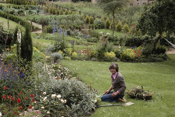 Horticulture「Penelope Mortimer」:写真・画像(17)[壁紙.com]