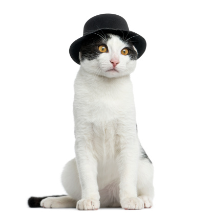 シルクハット「European cat wearing a top hat, sitting」:スマホ壁紙(14)