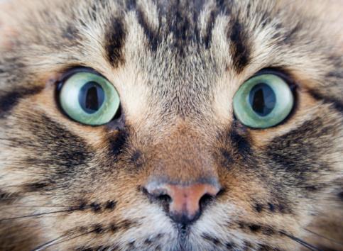 Animal Whisker「Surprise!」:スマホ壁紙(11)