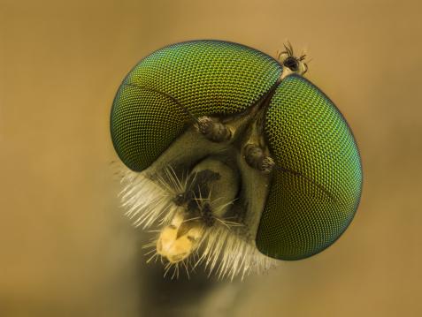 Fly - Insect「Snipe fly (Rhagionid)」:スマホ壁紙(16)
