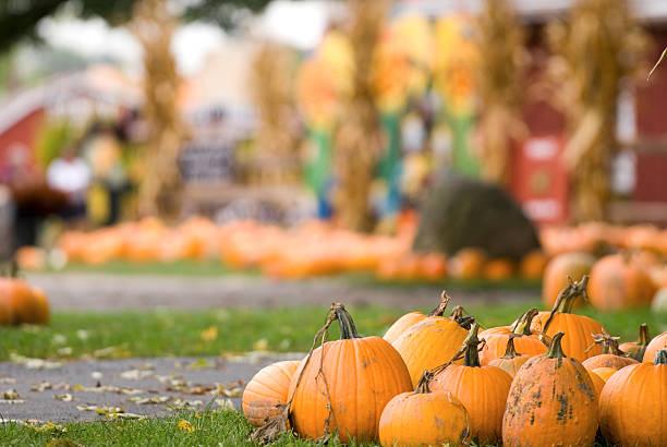 Pumpkin Farm Fun:スマホ壁紙(壁紙.com)