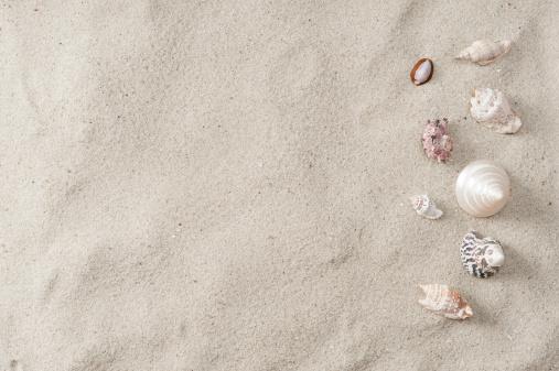 殻「シーシェルとビーチの砂」:スマホ壁紙(3)