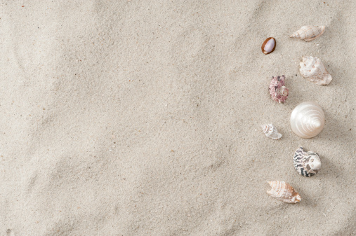 Mollusk「Seashell and beach sand」:スマホ壁紙(5)