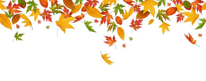 秋「パノラマに広がる秋の葉」:スマホ壁紙(19)