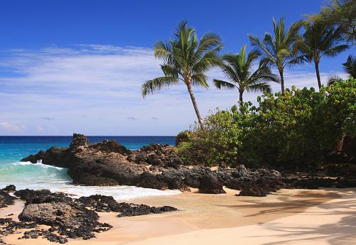Kihei「Maui Hawaii Pacific ocean palm tree beach scene」:スマホ壁紙(0)