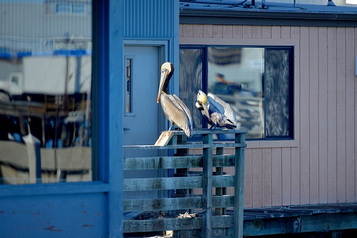 City of Monterey - California「Monterey, the pelicans rest on the piers.」:スマホ壁紙(4)