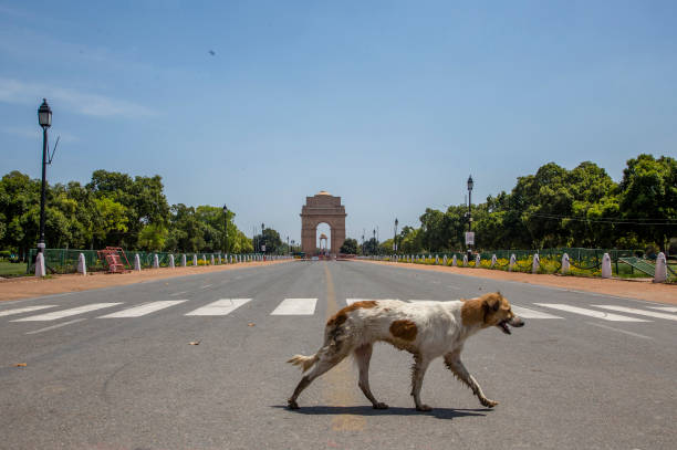 India Imposes Nationwide Lockdown As The Coronavirus Continue To Spread:ニュース(壁紙.com)