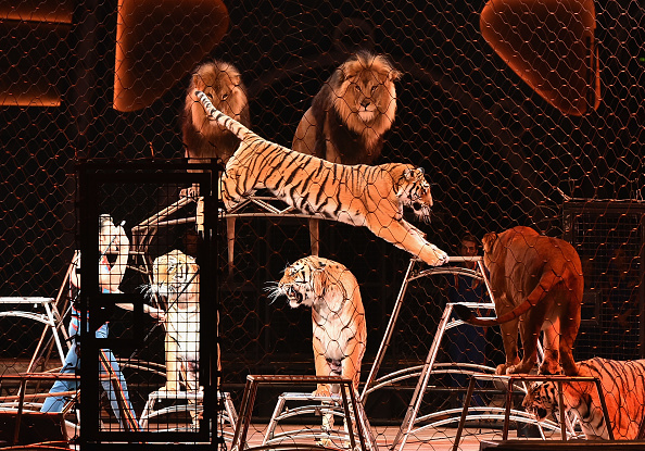 Ringling Brothers and Barnum & Bailey Circus「Ringling Bros. And Barnum & Bailey Circus Final Farewell」:写真・画像(6)[壁紙.com]