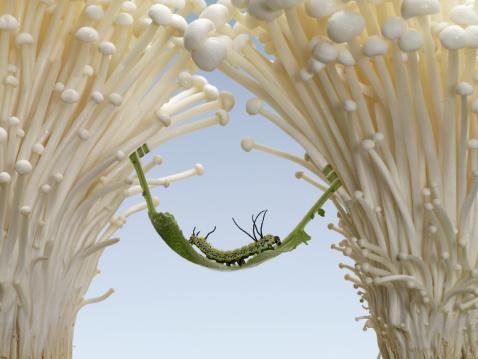 Hammock「japanese caterpillar resting on a leaf hammock」:スマホ壁紙(8)