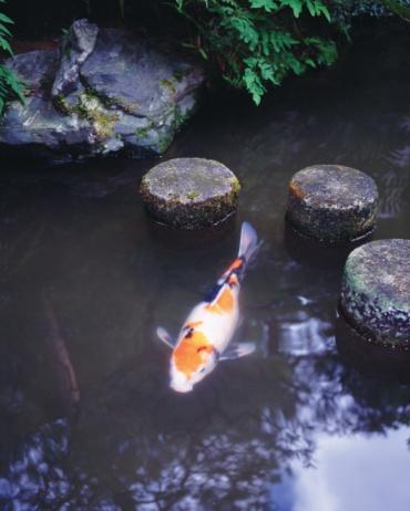 Carp「Japanese carp in pond of Japanese style garden, high angle view」:スマホ壁紙(19)