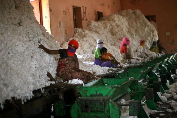 Agriculture「Crop Failures Provoke Suicides Amongst Indian Farmers」:写真・画像(16)[壁紙.com]