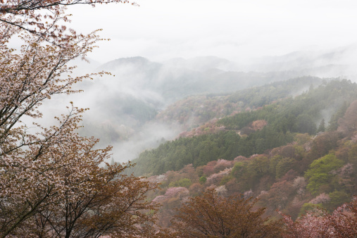 Spring Collection「Mist Over Mountain Ranges in Spring」:スマホ壁紙(5)