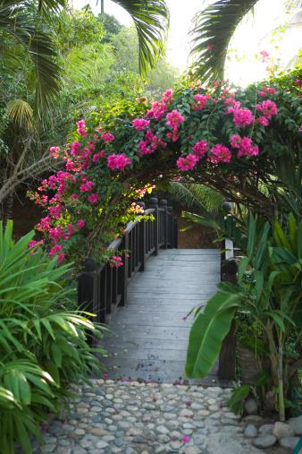 Sayulita「Mexico, Sayulita, bridge in garden with lush foliage」:スマホ壁紙(9)