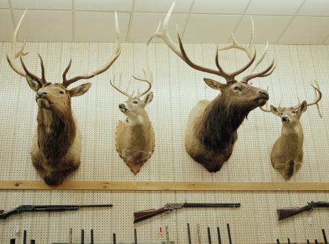 コンゴ民主共和国「Deer head trophies and rifles mounted on wall」:スマホ壁紙(11)