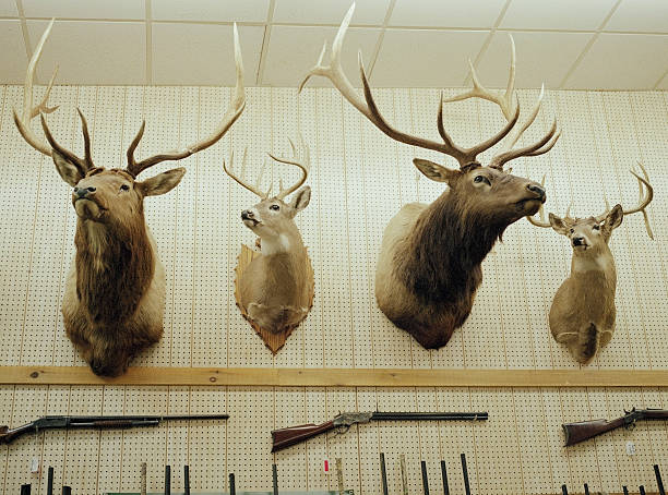 Deer head trophies and rifles mounted on wall:スマホ壁紙(壁紙.com)