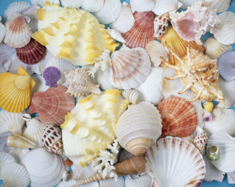 shell「Assorted seashells, full frame」:スマホ壁紙(12)