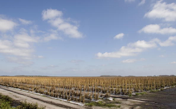 Phillippe Diederich「Hurricane Wilma Damages Florida Agriculture」:写真・画像(18)[壁紙.com]