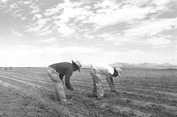 Arizona「Arizona Farmworkers」:写真・画像(12)[壁紙.com]
