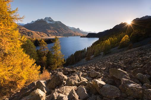 Larch Tree「Lake Sils in autumn, Engadine Valley, Graubunden,  Switzerland」:スマホ壁紙(16)
