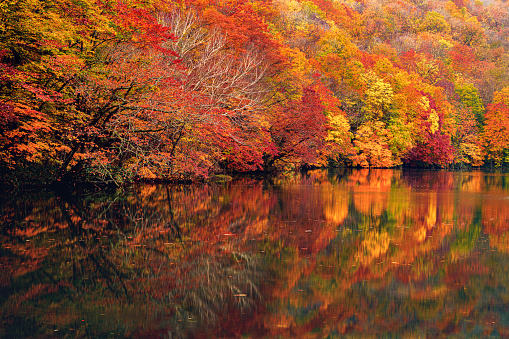 Satoyama - Scenery「Autumnal forest reflecting in the lake」:スマホ壁紙(3)