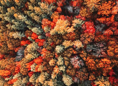 Wilderness「autumnal forest aerial view」:スマホ壁紙(12)