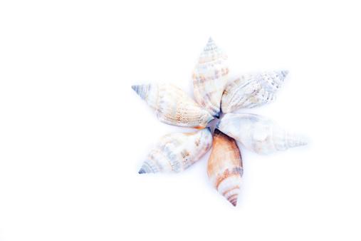 Sailor「Six shellfishes forming a circle」:スマホ壁紙(10)