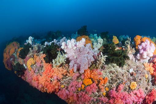 Arafura Sea「Colored Coral Reef, Indonesia」:スマホ壁紙(11)