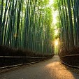 Bamboo壁紙の画像(壁紙.com)