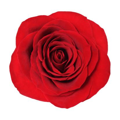 flower「ローズ、クリッピングパス」:スマホ壁紙(5)