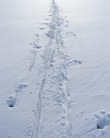 クロスカントリースキー「Cross-country ski tracks in the snow」:スマホ壁紙(19)