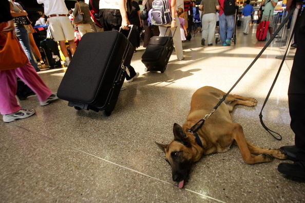 LAX Airport「U.S. Raises Air Security Alert To Red For The First Time」:写真・画像(3)[壁紙.com]
