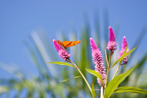Flapping Wings「Butterfly」:スマホ壁紙(12)