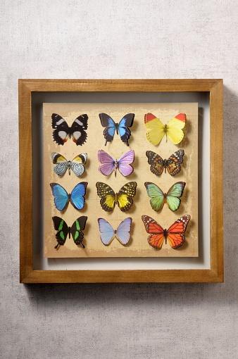 背景「butterfly」:スマホ壁紙(5)