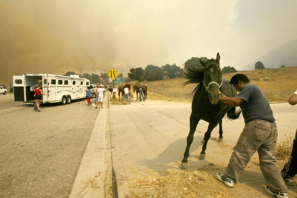 Grove「Wildfires Return to Southern California」:写真・画像(10)[壁紙.com]
