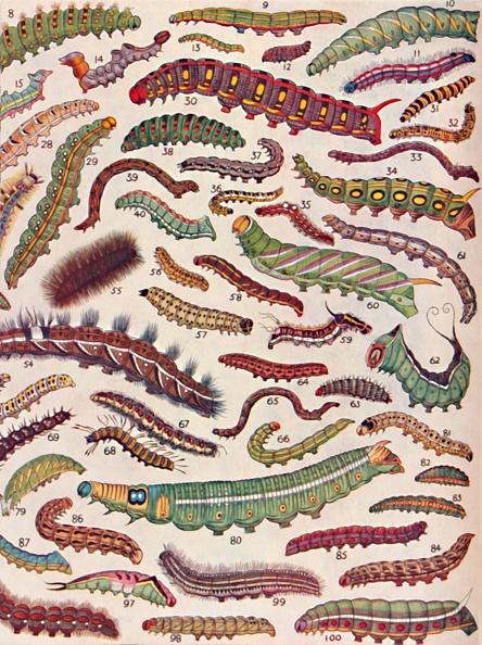 Texture「A Hundred Different Knds Of Caterpillars Of Butterflies And Moths」:写真・画像(11)[壁紙.com]