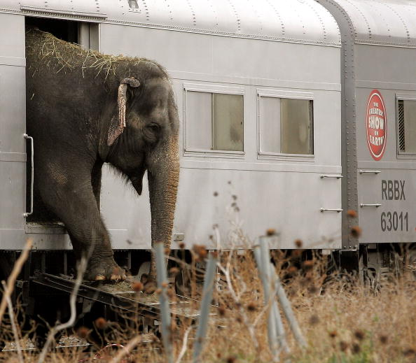 Ringling Brothers and Barnum & Bailey Circus「Ringling Bros. Circus Arrives In Chicago」:写真・画像(5)[壁紙.com]