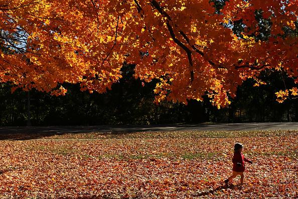 秋「Brooklyn's Prospect Park Awash In Fall Foliage」:写真・画像(5)[壁紙.com]