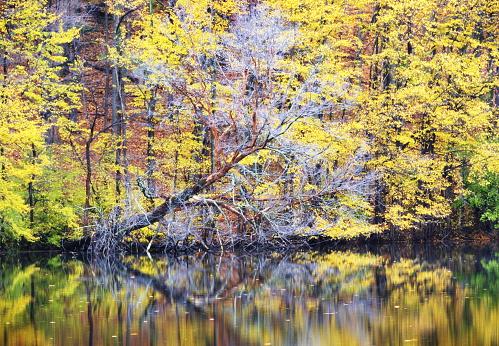 アディロンダック森林保護区「存分にある秋の森の木」:スマホ壁紙(13)