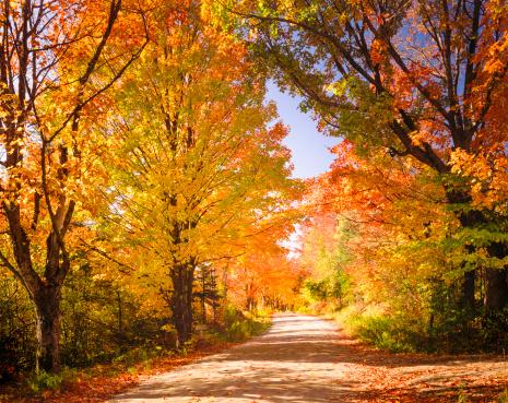 Sugar maple「autumn foliage and country lane」:スマホ壁紙(7)