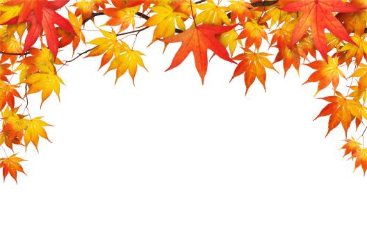 Maple Leaf「Autumn Foliage On White」:スマホ壁紙(4)