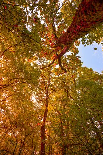 グルノーブル「Autumn Foliage」:スマホ壁紙(19)