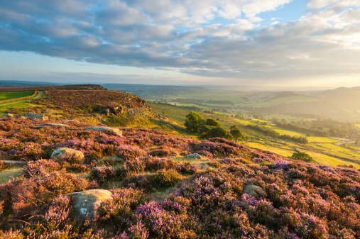 Hill「Curbar Edge Heather, Peak District National Park」:スマホ壁紙(16)